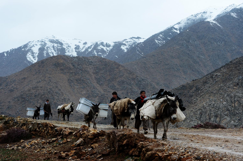 A választás kellékeit mai napig szamárháton szállítják a hegyi utakon Shutul tartományban Fotó: Shah Marai / AFP