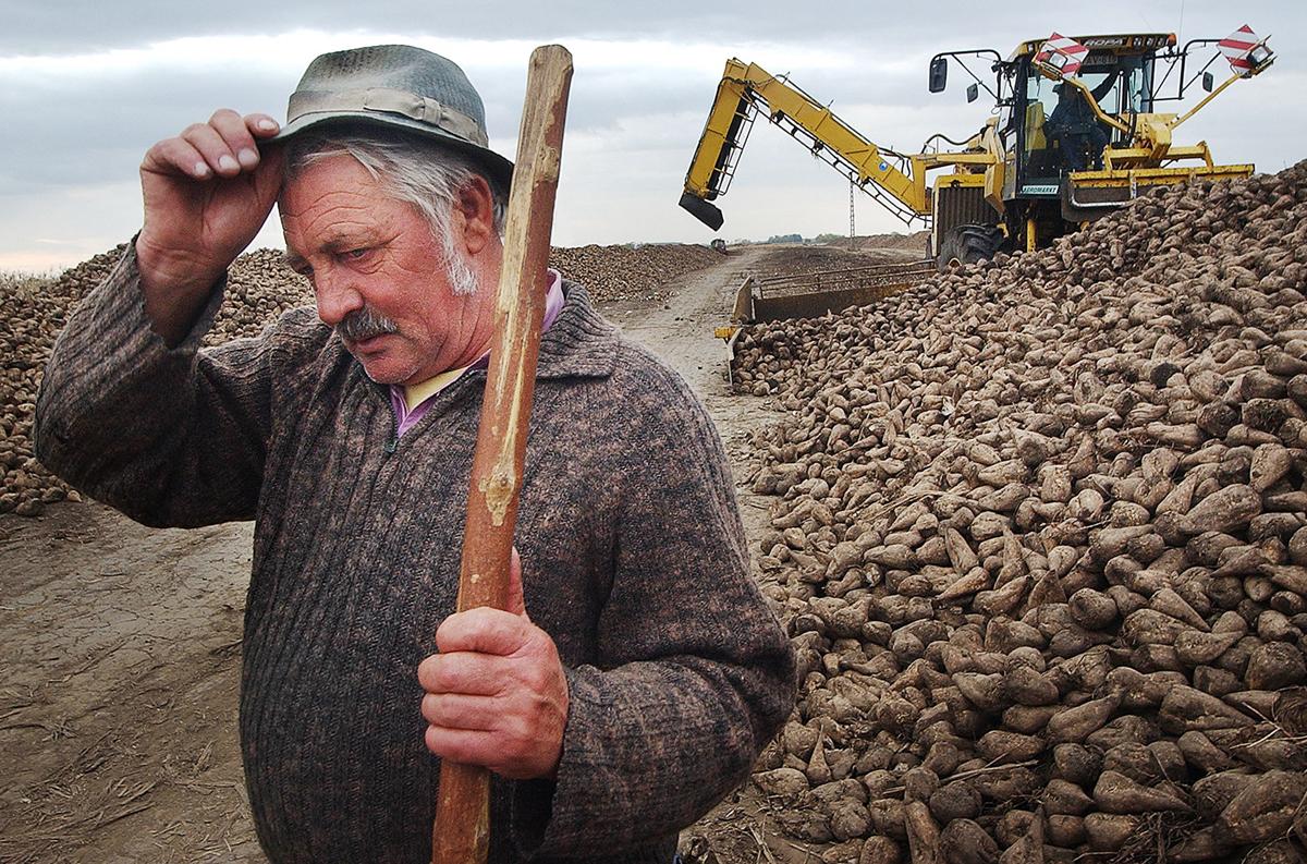 Szilágyi János mezőgazdasági munkás az utolsó cukorrépa kampányon. - Berettyóújfalu, 2006. okt. 24., kedd / Szabad Föld fotó: Ujvári Sándor