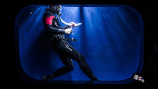 A diver cleans the 'medusa aquarium' in the Aquarium of Genoa on September 13, 2018. On August 14, with the deadly fall of the Morandi Bridge one of the greatest tragedies in its history, struck Genoa, one month later, the city is still healing, while trying to look to the future, the whole city is invited to respect a minute of silence at 11H36 (9H36 GMT), on September 14, then to meet at 17H30 (15H30 GMT) to pay tribute to the 43 dead and dozens wounded in the accident. / AFP PHOTO / MARCO BERTORELLO
