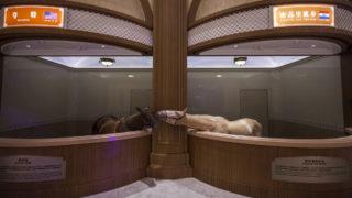 Csiangjin, 2018. szeptember 19.A Lovas Kultúra Múzeuma a Csiangszu kínai tartományban fekvő Csiangjin városában 2018. szeptember 17-én. A múzeumban több mint 30 ország 47 ritka fajtáját őrzik, amelyeket a látogatók csoportokban körbevezetve tekinthetnek meg. A lovak csak néhány órát töltenek a kiállítóhelyen, utána visszavezetik őket istállóikba. (MTI/EPA/Aleksandar Plavevski)