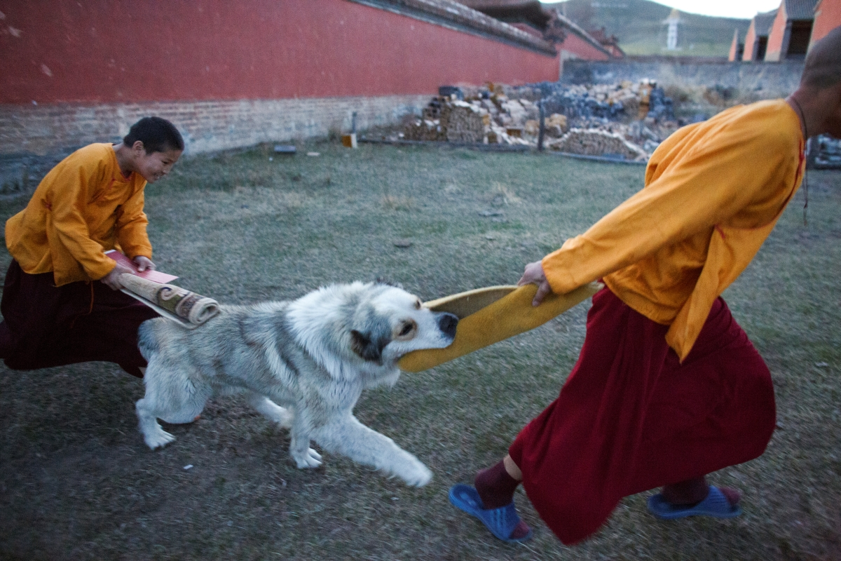 """Young Buddhist monks play with a dog after two hours of evening prayers at the Amarbayasgalant Monastery in the Baruunburen district, Selenge province, Mongolia, April 26, 2018. REUTERS/Thomas Peter  SEARCH """"MILLENNIAL MONKS"""" FOR THIS STORY. SEARCH """"WIDER IMAGE"""" FOR ALL STORIES."""