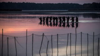 Trebon, 2018. október 15.Megkezdik a ponty lehalászását a dél-csehországi Trebon közelében 317 hektáron elterülő Velky Tisy-tavon 2018. október 15-én. (MTI/EPA/Martin Divisek)