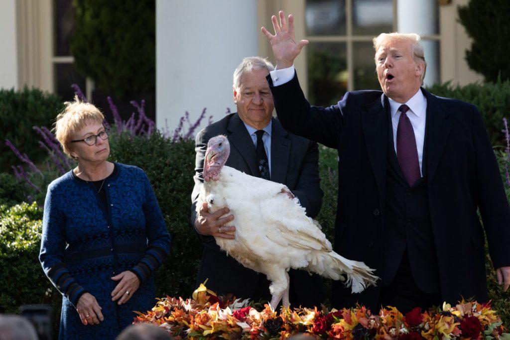 Donald Trump amerikai elnök (j) ünnepélyesen megkegyelmez a Peas nevű hálaadásnapi pulykának a washingtoni Fehér Házban 2018. november 20-án. Mellette balról Jeff Sveen, a Országos Pulykaszövetség elnöke. Először Harry Truman elnök kegyelmezett meg a neki nevelt pulykának több mint 50 évvel korábban, és azóta minden évben így tesz a Fehér Ház valamennyi lakója. Az Egyesült Államokban kialakult hagyomány szerint az ünnepi vacsorára pulykát tálalnak hálaadás napján.(Photo by Cheriss May/NurPhoto)