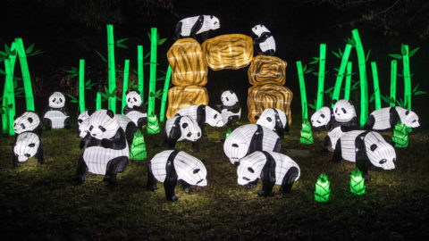 Párizs, 2018. december 14.Világító pandaszobrok a francia Nemzeti Természettudományi Múzeum parkjában, Párizsban 2018. december 13-án. A november 16-án nyílt, veszélyeztetett és kihalt állatfajokat bemutató kiállítás 2019. január 5-ig látogatható.MTI/EPA/Etienne Laurent