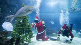 Mikulásjelmezbe öltözött búvárok díszítenek egy karácsonyfát a budapesti Tropicarium akváriumában Fotó: Mohai Balázs / MTI