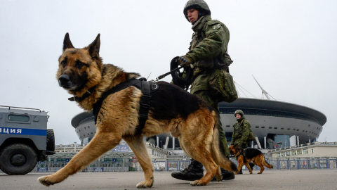 Russian riot policemen walk with dogs as they take part in special security exercises at the Saint-Petersburg Stadium (Krestovsky Stadium) in Saint Petersburg on April 20, 2018, ahead of the 2018 FIFA World Cup tournament in Russia.The 2018 FIFA World Cup will be taking place in Russia from June 14 to July 15, 2018. / AFP PHOTO / OLGA MALTSEVA