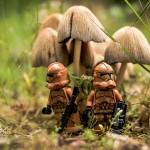 benedek_lampert_forest_scout_k_j3.jpg
