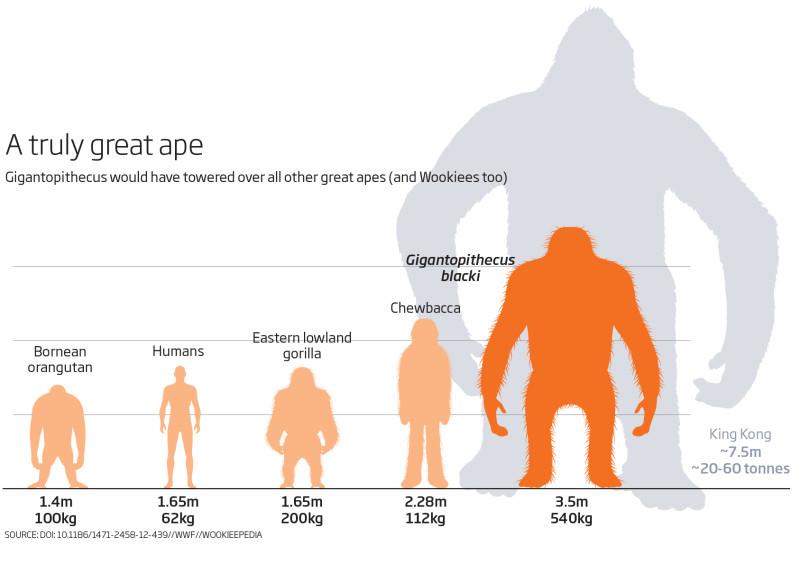 g_gigantopithecus_web-800x565
