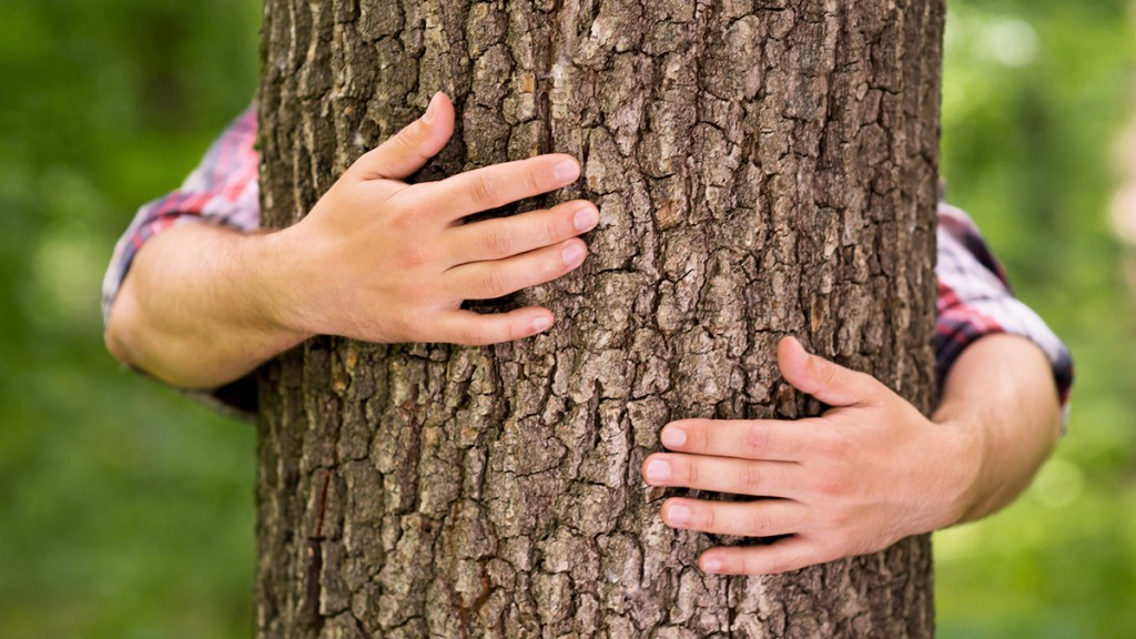 Close-up of male hands hugging tree